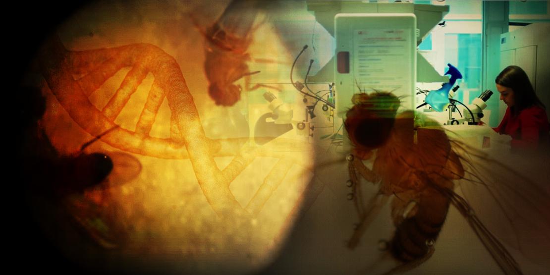 """""""TEACH AND FLY"""", Jornada de formación en genómica y secuenciación de última generación para profesores"""