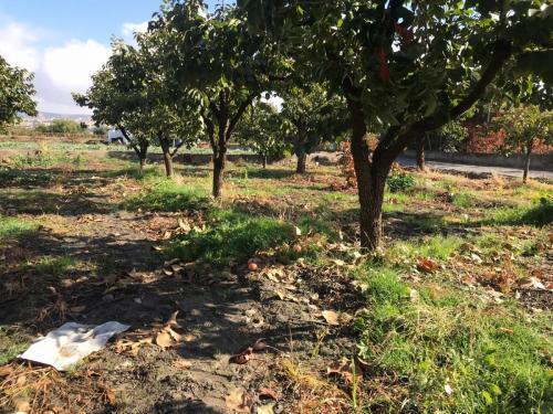 MCTF Granada Fotos Trabajo 27