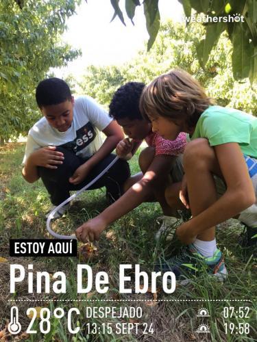 MCTF Web ESCUELAS Pina Ebro Fotos 14