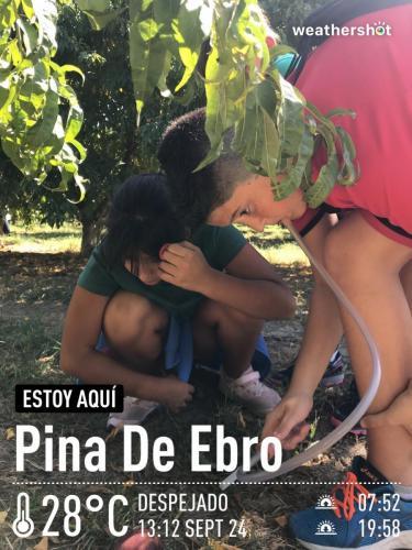 MCTF Web ESCUELAS Pina Ebro Fotos 15
